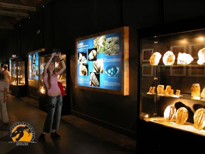 Muzeum Ziemi w JuraParku w Solcu Kujawskim