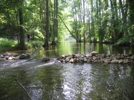 płynie rzeka lasem