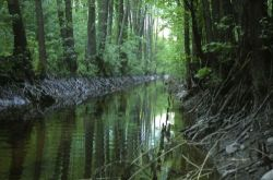Rzeka Orla w Więcborku