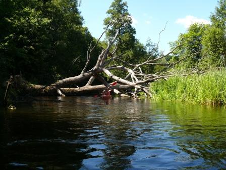 Rzeka Wda w Tleniu
