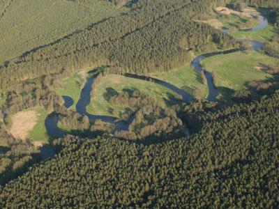 Rzeka Brda w Borach Tucholskich