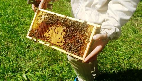 Galeria dla Dzień pszczół